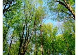 Зеленые деревья в лесу