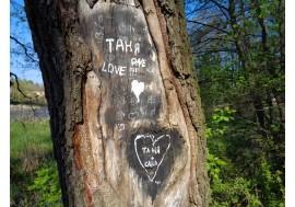 Старое дерево без коры с надписями