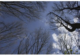 Деревья на фоне голубого неба