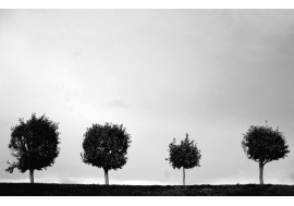 Одинокие деревья