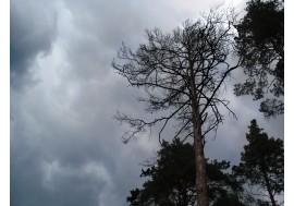 Перед грозой в лесу