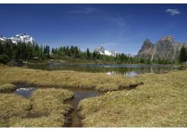 Лесное озеро в горах