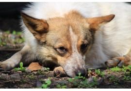 Задумчивый взгляд собаки