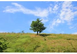 Одинокое дерево на зеленой траве