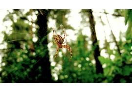 Паучок на паутине